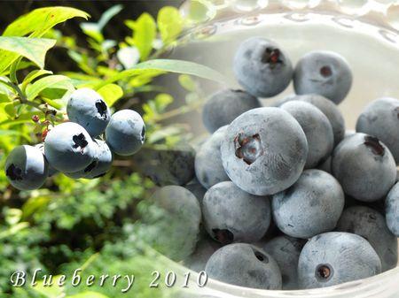 20100718_berry